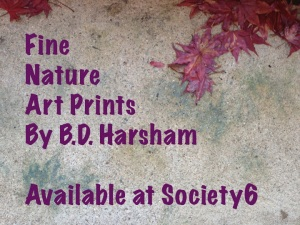 Art Prints are Available at Society6