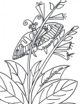 swallowtail fairy coloring page
