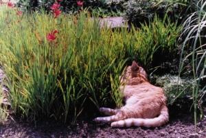 Cat:lilies