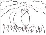 Sheep on Raasay