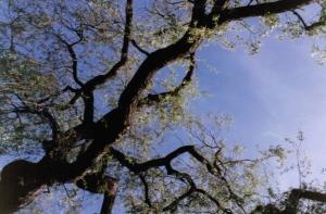 Tree overhead