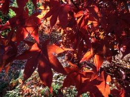 tree, autumn, fall