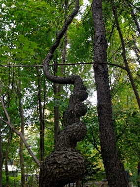 green trees, spiral trunk