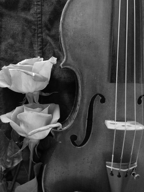 Violin with Roses Black and White
