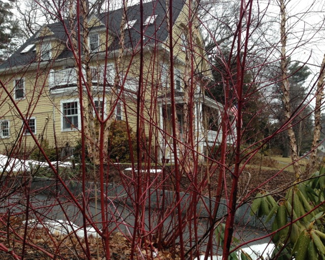 Red Branches in Winter, Yellow House