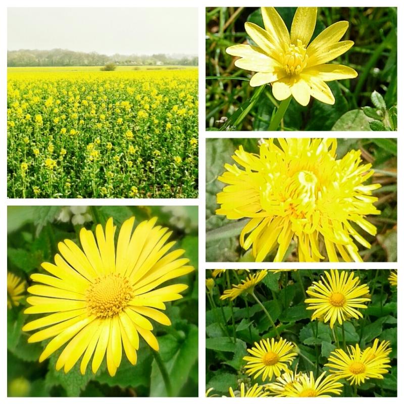 Zealous Yellow