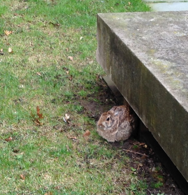 Rabbit in Rain, by bench