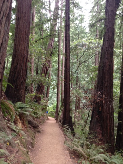 Path in Redwood forest