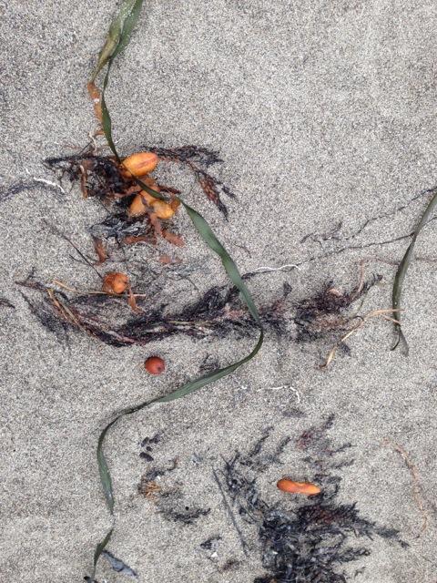 Seaweed at Muir Beach