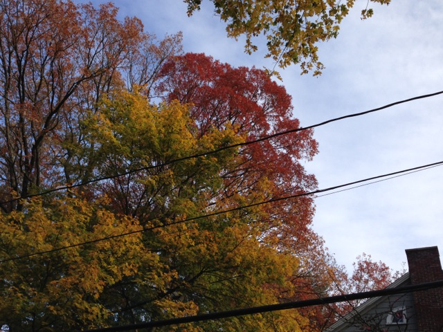 Fall Foliage and power lines