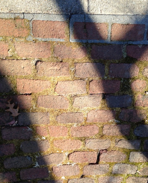 Shadows of branches on brick wall