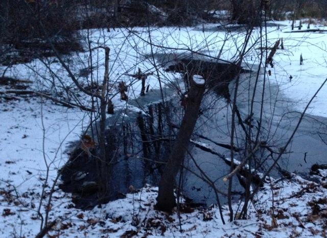 Wetlands in Snow