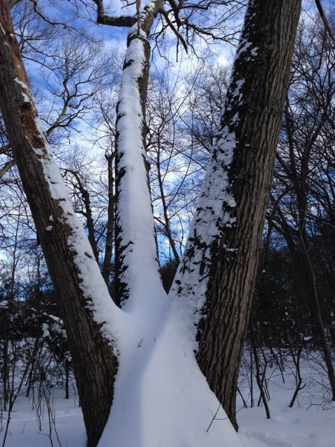 Snow on three tree