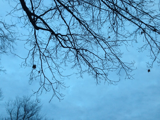 Bare Branches at Blue Dusk