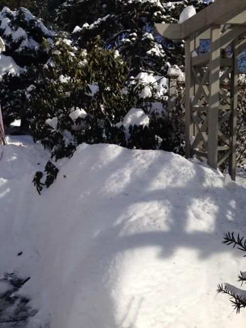 Gate shadows on snow