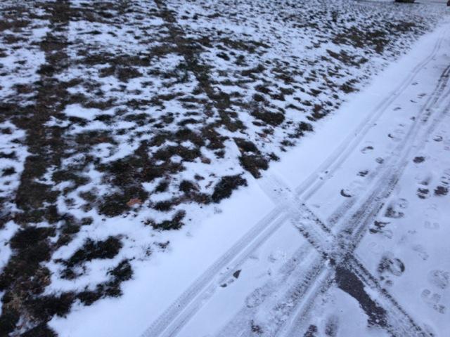 Tire tracks on grass