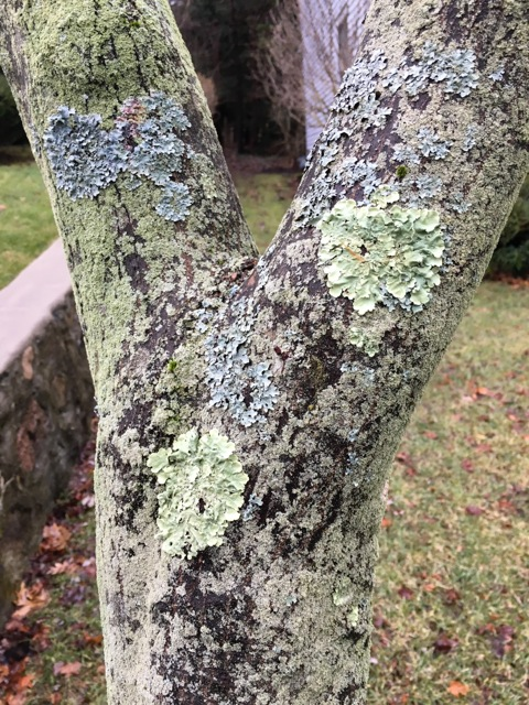 Shades of Lichen on Tree