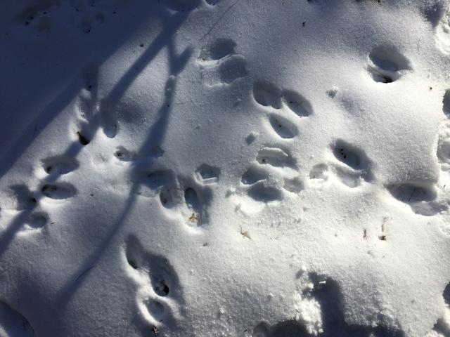 chaos of rabbit tracks
