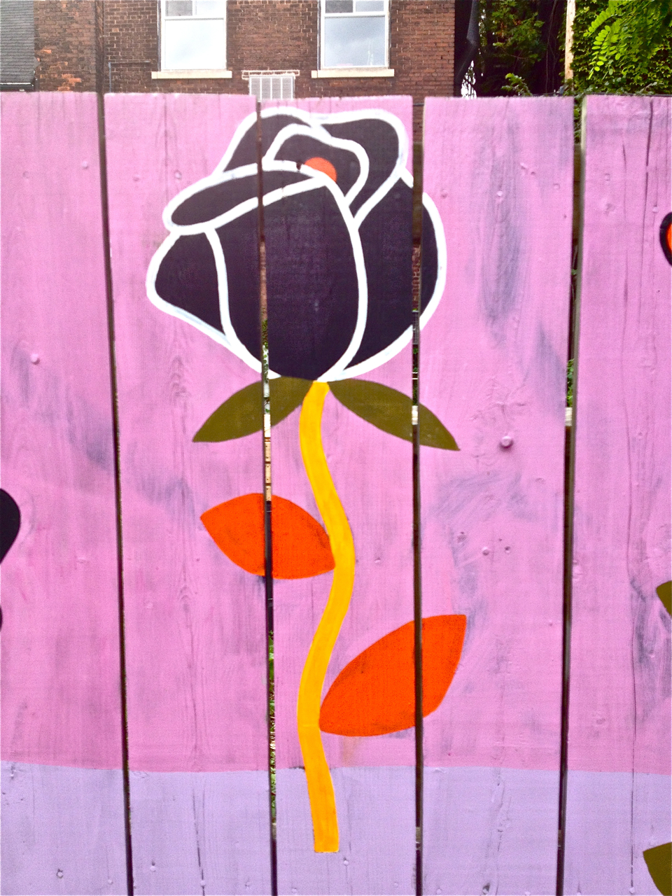 Black Rose on a Pink and Purple Fence