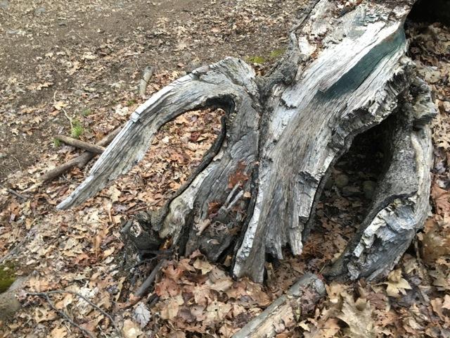 driftwood swam