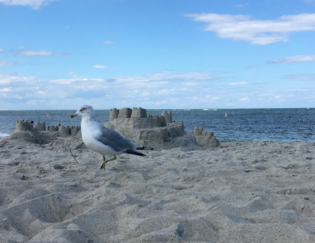 Seagull in front of sand castle by the sea, Atlantic Ocean