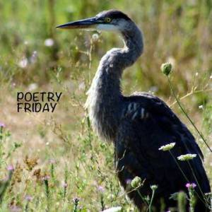 Poetry Friday Heron