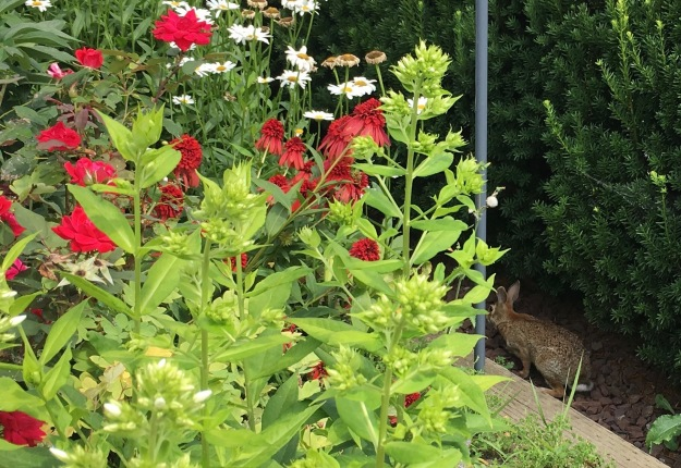 Bunny hiding behind flowers