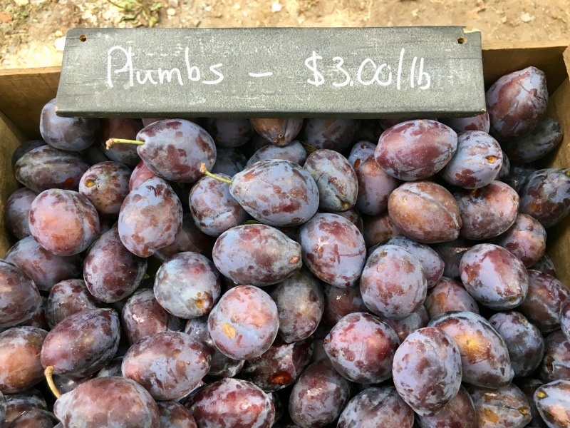 Farmstand sign: reads Plumbs - $3.00/lb